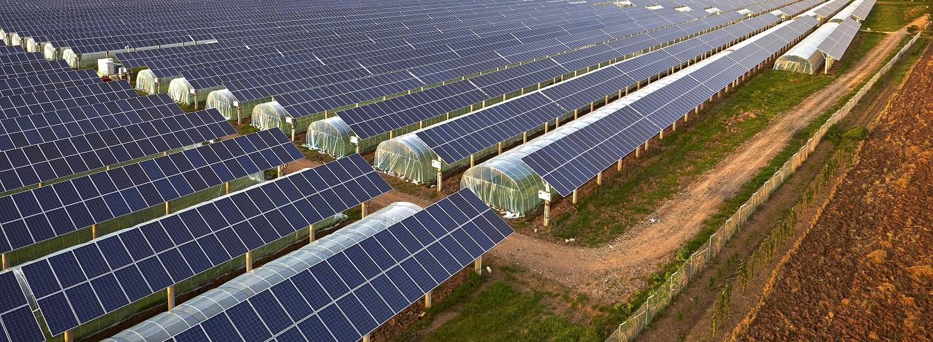 BU: Win-Win für Landwirte: Die PV-Module sorgen für sauberen Strom und schützen die Ernte vor schädlichen Umwelteinflüssen. (Foto: iStock)